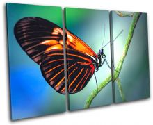 Butterfly Nature Animals - 13-0155(00B)-TR32-LO